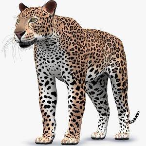 leopard panthera pardus 3D