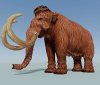 mammoth animal model