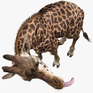 realistic giraffe rigged fur 3D
