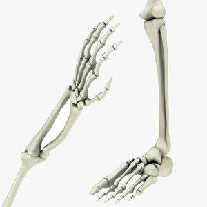 skeletal hand arm leg foot 3D
