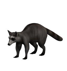 3D animal raccoon nature