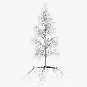 birch dry 3 tree model