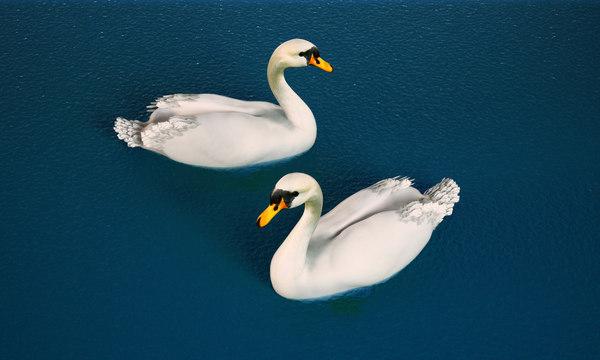 3D swan white