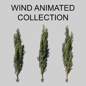 3D populus wind animation tree model