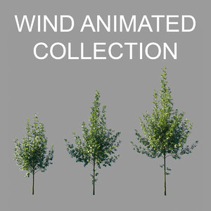 tilia platyphyllos wind animation model