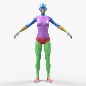 3D sculpting anatomy