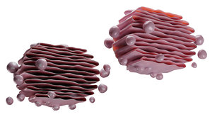 cell biology model