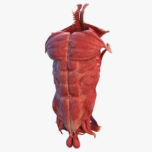3D model human torso muscular body