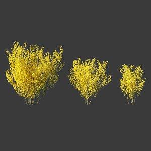 3D forsythia intermedia shrub bushes model