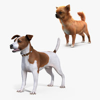 3D dogs jack russell