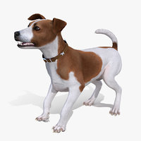 3D model spotted jack russell terrier