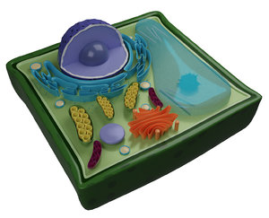 3D plant cell