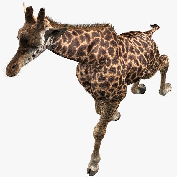 realistic giraffe fur tongue animation 3D