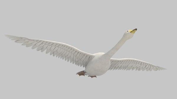 bird animal 3D model