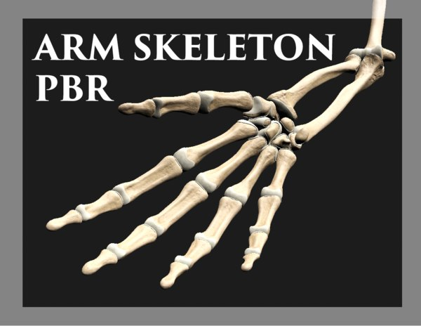 3D arm skeleton pbr model