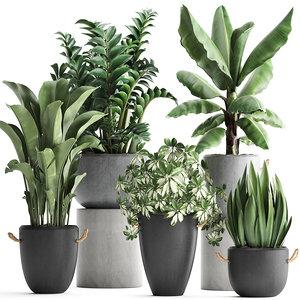 plants exotic 3D