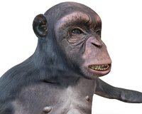 Chimpanzee Rigged Primate