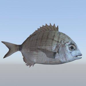 3D fish diplodus sargus animation model