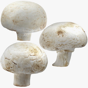 white button mushrooms 02 3D