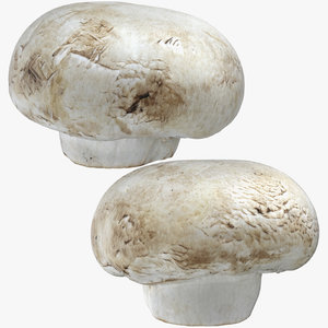 white button mushrooms 03 3D model