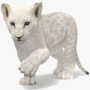 white lion cub rigged 3D model