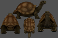 Turtle Low-poly 3D model