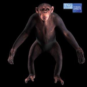 animation chimpanzee 3D