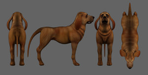 3D bloodhound dog low-poly