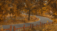 3D model road forest autumn