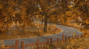 3D model road forest autumn