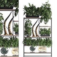 exotic plants decor shelf model