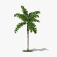 3D royal palm model