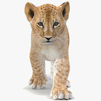 lion cub animation model