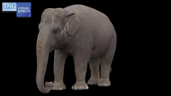 3D elephant mammal animal