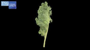 kale vegetable food 3D model