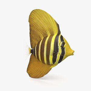 sailfin tang 3D model