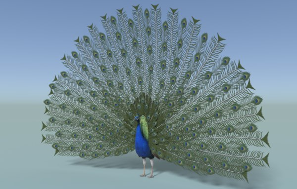 animal bird peacock 3D model