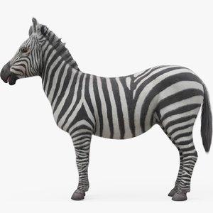 3D zebra model