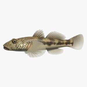 3d model rhinogobius giurinus swimming