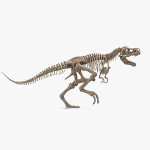 tyrannosaurus rex skeleton fossil 3D