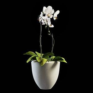 3D model flowers orchid set 01