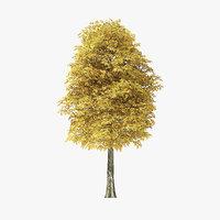 autumn rock elm tree 3D