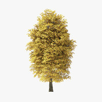 autumn rock elm tree model