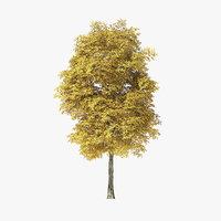 3D tree rock elm model