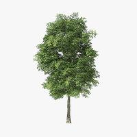 tree rock elm 3D model