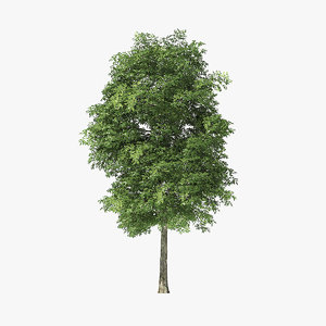 tree rock elm 3D model
