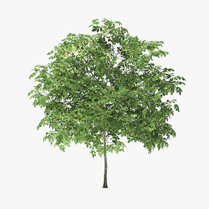rock elm tree 3 3D