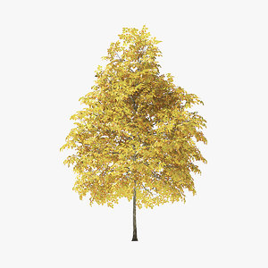 autumn rock elm tree 3D model