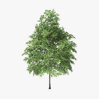 3D rock elm tree 4