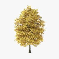 3D model autumn rock elm tree